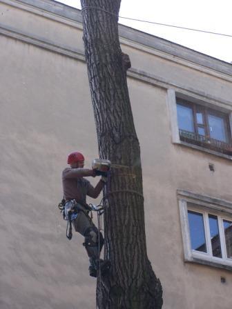 Wchodzenie na drzewa